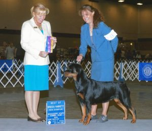 Memphis Kennel Club All Breed Dog Show, August 18-19, 2018